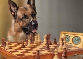 умные шахматы